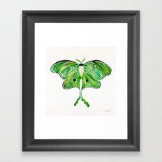 Luna Moth Framed Art Print