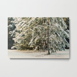 Beauty of Winter 47 Metal Print