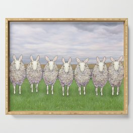 border leicesters in a line Serving Tray