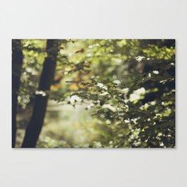Sun and tree Canvas Print