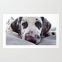 Dalmatian Puppy Art Print