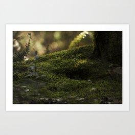 Muschio Naturale Art Print