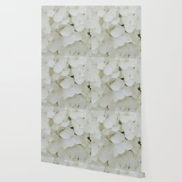 Hydrangea Flowers White Blossom Floral Photograph Wallpaper