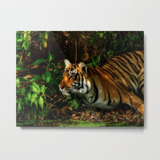 Bengal Beauty Metal Print