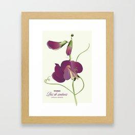 Pea- Pisello Odoroso Framed Art Print