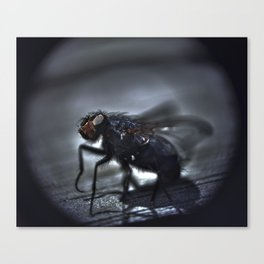 fly ties  Canvas Print