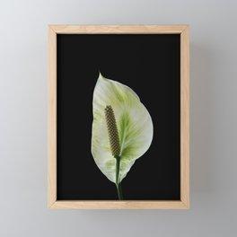 Peace Lily on Black #1 #floral #decor #art #society6 Framed Mini Art Print