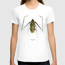 Acrocinus II T-shirt