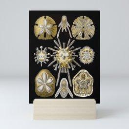 Ernst Haeckel Echinidea Sea Urchin Mini Art Print