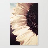 sunflower Canvas Prints featuring Sunflower by Anne Staub