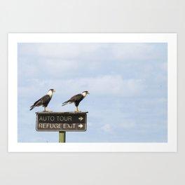 Crested Cara Cara Hawks Art Print