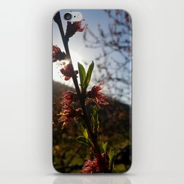 Afternoon bloom iPhone Skin