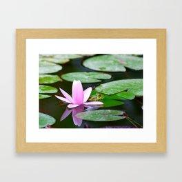 Lotus and frog Framed Art Print
