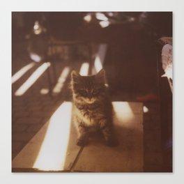 Kitten of the Souk Canvas Print