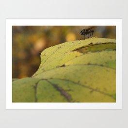 Fly Photobomb Art Print