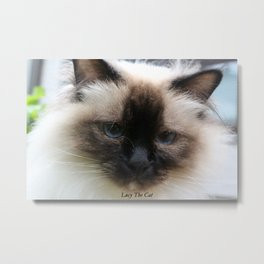 Lucy The Cat 2 Metal Print