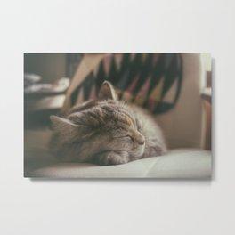 Sweet lullaby. Cat nap. Metal Print