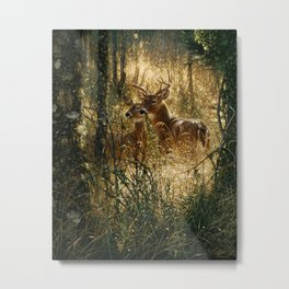 Whitetail Deer - A Golden Moment Metal Print