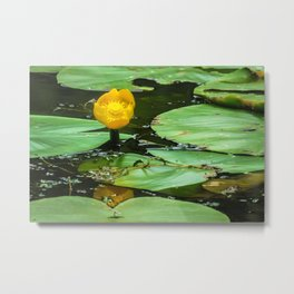 Nuphar Lutea Water Lily Blossom Metal Print