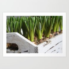 Box of Spring Art Print