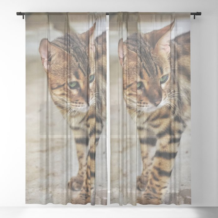Cat by Simone Fischer Sheer Curtain