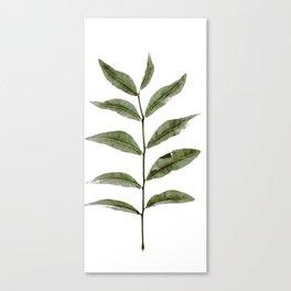 Olive Green Botanical (Color) Canvas Print