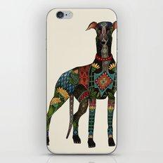 greyhound ivory iPhone & iPod Skin