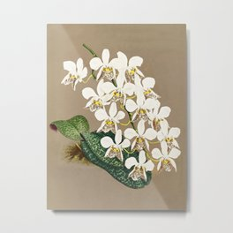 White Orchids Botanical Print on a Tan Background Metal Print