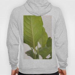 Hojas verdes (2) (green leafs) Hoody