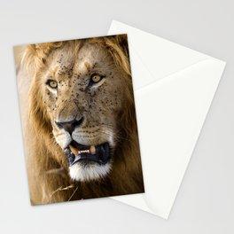 Lion, Masai Mara Stationery Cards
