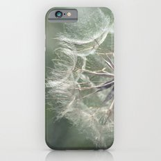 Tragopogon -Meadow Salsify 43 iPhone 6s Slim Case