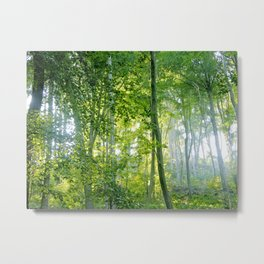 MM - Sunny forest Metal Print