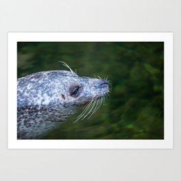 sea dog Art Print