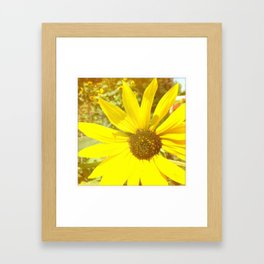 sunflower beauty  Framed Art Print