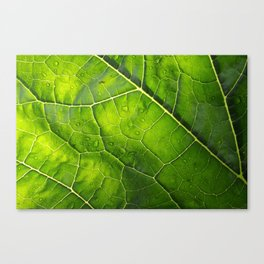 Veins of a Courgette Leaf  Canvas Print