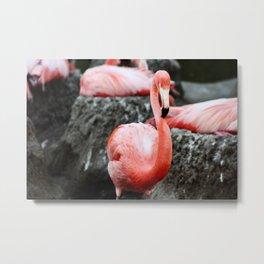 Flamingo on the rocks Metal Print