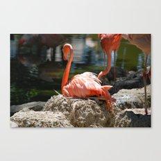 Sitting Flamingo Canvas Print