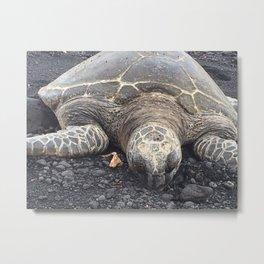 Just Chillin - Turtle Beach Hawaii Metal Print