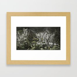 A WEB ON A BUSH Framed Art Print