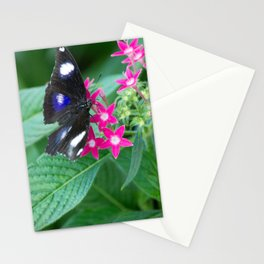 EggFly Butterfly Stationery Cards