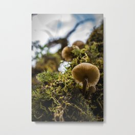 Moss and Mushrooms Metal Print