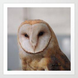 Barn Owl on Alert Art Print