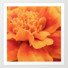 Marigold Summer Art Print