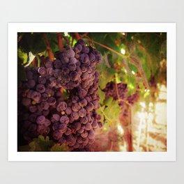 Vineyard Vines Art Print