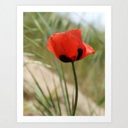 Wild Poppy Art Print