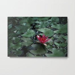 Lost Among the Lily Pads Metal Print