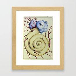 Wunderkammer Tav.2 Framed Art Print