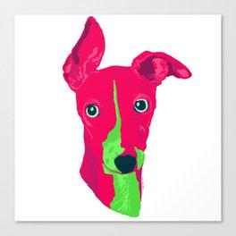 italian greyhound - wht Canvas Print