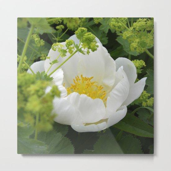 peony bloom macro XXVI Metal Print
