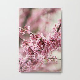 Country Blush Metal Print